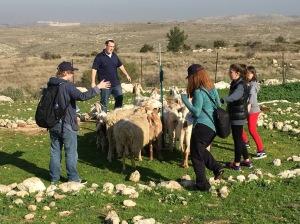 Israel 15-4 Sheep
